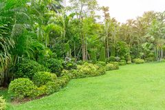 Fresh green grass smooth lawn as a carpet with curve form of bush, palm trees in a backyard, good maintenance lanscapes. In a luxury house`s garden under royalty free stock photography