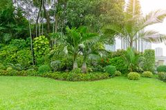 Fresh green grass smooth lawn as a carpet with curve form of bush, trees in a backyard, building on background, good maintenance. Lanscapes in a luxury house`s stock photography