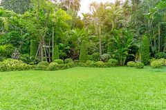Fresh green grass smooth lawn as a carpet with curve form of bush, trees in a backyard, good maintenance lanscapes. Fresh green grass smooth lawn as a carpet royalty free stock photography