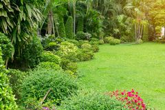 Fresh green grass smooth lawn as a carpet with curve form of bush, trees in a backyard, good maintenance lanscapes. Fresh green grass smooth lawn as a carpet royalty free stock images