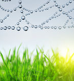 Fresh green grass and spider web Stock Images
