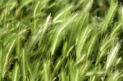 Fresh green grass Royalty Free Stock Images