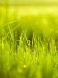 Fresh green grass in spring season Stock Photo