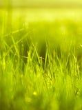 Fresh green grass in spring season Stock Photo