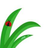 Fresh green grass stalk close up. Water drop set. Morning drop set. Ladybug Ladybird insect. Cute cartoon baby character. Garden n Royalty Free Stock Photo