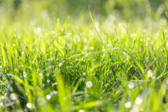 Fresh green grass in the summer sunny day. Stock Photos