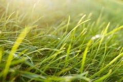 Fresh Green Grass in a Sunlit Meadow. Fresh Bright Green Grass in a Sunlit Meadow. Close-up View Stock Photo