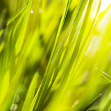 Fresh green grass in sunshine Stock Images