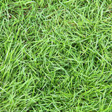 Fresh green grass surface Royalty Free Stock Image