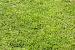 Fresh Green Grass Texture Stock Images