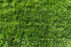Fresh Green Grass Texture Royalty Free Stock Photography