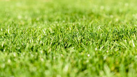 Fresh Green Grass Texture Royalty Free Stock Photo