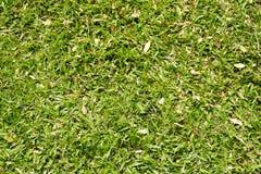 Fresh green grass texture Stock Photo