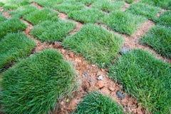 Fresh Green Grass tiles Stock Image