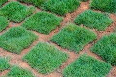 Fresh Green Grass tiles Royalty Free Stock Photography