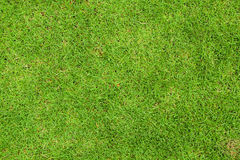 Fresh green grass top view Royalty Free Stock Images