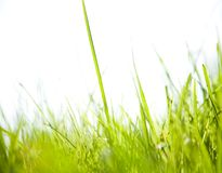 Fresh Green Grass Under The Sunlight Royalty Free Stock Image
