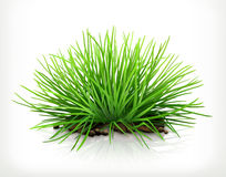 Fresh green grass, vector icon Royalty Free Stock Images