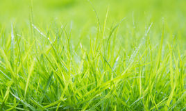 Fresh green grass with water droplet on sunshine Royalty Free Stock Photos