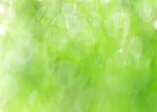 Fresh green grass with water droplet Royalty Free Stock Photography