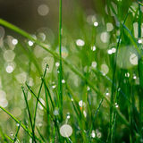 Fresh green grass with water drops on background of sunlight. Stock Photos