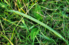 Fresh green grass with water drops. Close up Stock Photos