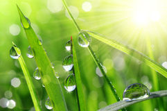 Fresh green grass with water drops Royalty Free Stock Photography