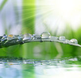 Fresh green grass with water drops closeup. Stock Image