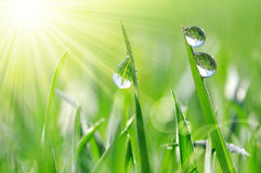 Fresh green grass with water drops closeup. Royalty Free Stock Images