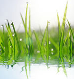 Fresh green grass with water drops closeup. Stock Photography