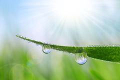 Fresh green grass with water drops closeup. Stock Photos