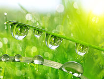 Fresh green grass with water drops closeup. Royalty Free Stock Photos