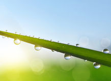 Fresh green grass with water drops closeup Royalty Free Stock Photo