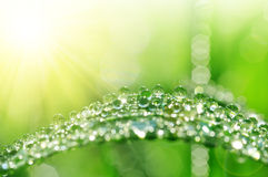 Fresh green grass with water drops closeup Royalty Free Stock Photography