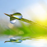 Fresh green grass with water drops closeup. Stock Images