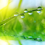 Fresh green grass with water drops Royalty Free Stock Photo