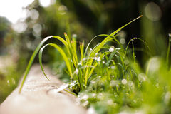 Fresh green grass with water drops Stock Photos