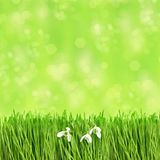Fresh green grass with water drops. springtime Royalty Free Stock Image