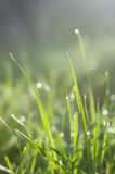 Fresh green grass with water drops Stock Images