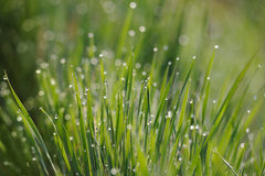 Fresh green grass with water drops Stock Photography