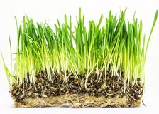 Fresh green grass on white background Royalty Free Stock Photos
