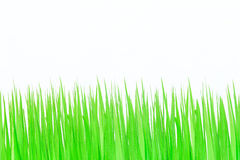Fresh green grass on white background Stock Image