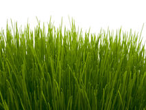 Fresh green grass on white background. Fresh green grass isolated on white background Stock Images