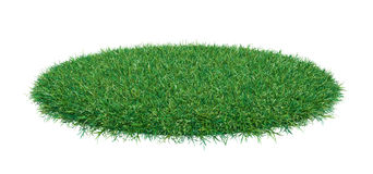 Fresh green grass on white background Royalty Free Stock Images