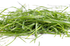 Fresh green grass on white background Stock Photography