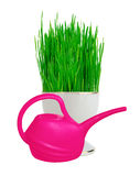 Fresh green grass in white pot and pink water can isolated on wh Stock Image