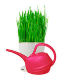Fresh green grass in white pot and red water can isolated Royalty Free Stock Images