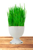 Fresh green grass in white pot on wooden table isolated on white Stock Photos