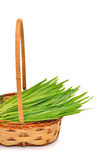 Fresh green grass in the wicker basket royalty free stock photo
