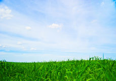 Fresh Green Grass With Blue Sky Royalty Free Stock Photography